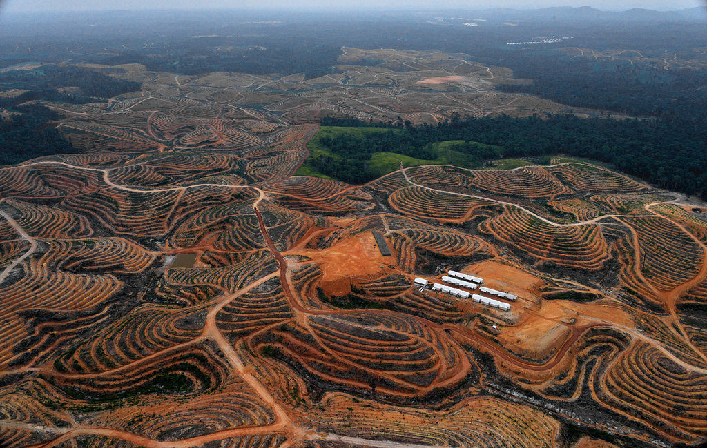 Deforestation in Indonesia - Oil Palm