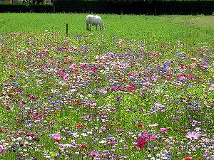 Jachère fleurie en France