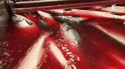 http://www.dangersalimentaires.com/wp-content/uploads/2011/02/saumons.jpg