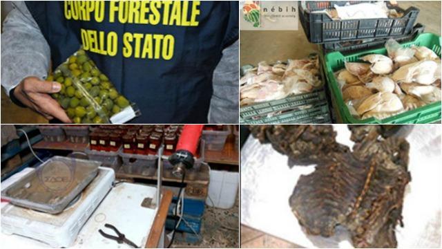 poulet-au-formol-olives-repeintes.saisie-record-daliments-dangereux