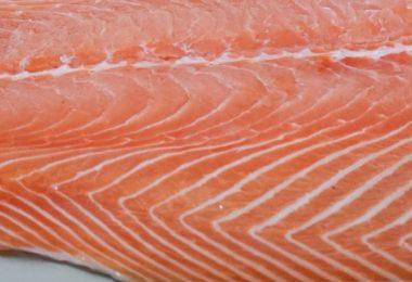 saumon-pacifique