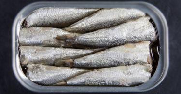 boite-de-sardines